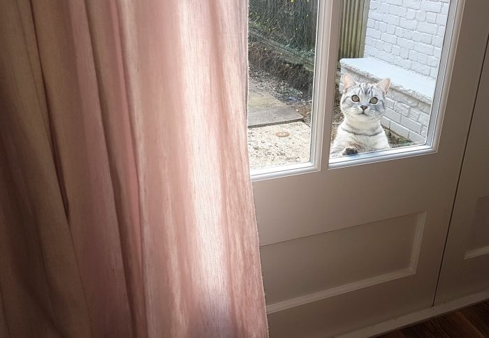 A cat and the curtain